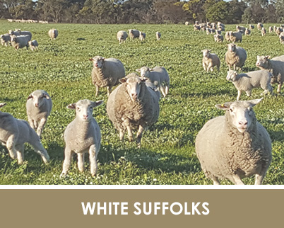 white-suffolk-home